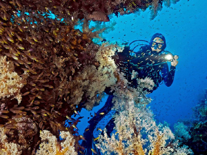Diver's visiting a rich overgrown table coral with a huge... by Henry Jager
